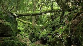 An area within Puzzlewood forest