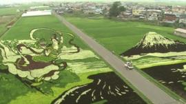 Paddy field with rice designs