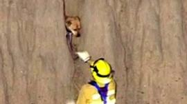 Fire fighters rescue a dog