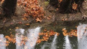 مینا: پاییز باغشاد اصفهان
