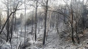 İsrail'in Hayfa kentinde yanan bir orman