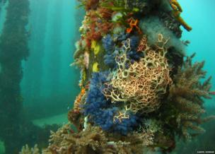 colourful coral and algae on a jetty pillar