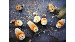 """Fotografía de Erica Wu, primer lugar en la categoría """"Animales"""""""