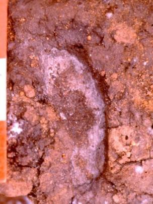 Pisada humana con una data de 14.500 años de antigüedad.