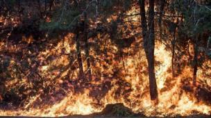 Hayfa'da yanan ağaçlar