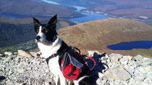 Dog on Ben Nevis