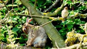 Hare and bird