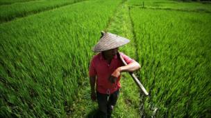 man stands in rice field