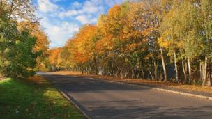 Autumn colours on trees on Currie Road, Galashiels