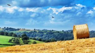 Fields in Montgomeryshire (also known as Maldwyn) Wales