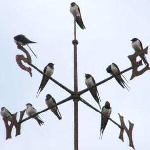 Swallows on a weather vane