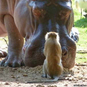 Monkey and a hippopotamus