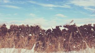 Momo the dog hiding on a hill