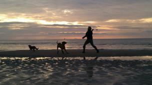 Man throwing a ball for dogs on the beach