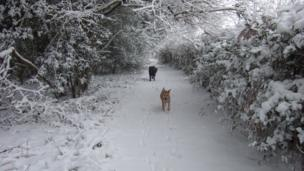 Dogs playing in Standsted forest