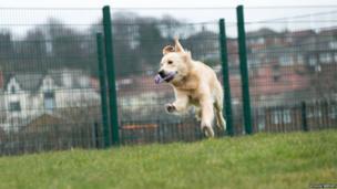 Morris runs across the grass at the school