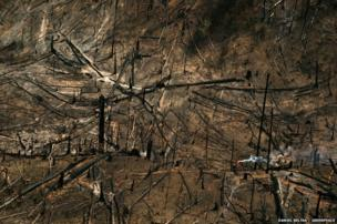 After extracting the most valuable species, the forest is burned to plant soy or raise cattle, Porto de Moz, Para State, Brazil