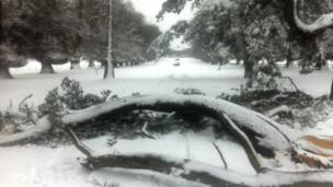 Fallen trees block the road for drivers near Mold who are doubly hampered by the heavy snow which hit north Wales
