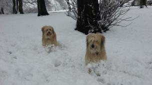 Dogs in the snow. Photo: Sylvain Puyau