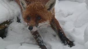 Fox. Photo: Louise Selman