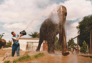 Bath-time in the elephant paddock in the late 1980s.