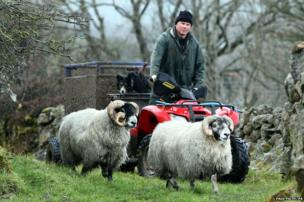 Graham Wallace with the two Scottish Black face rams