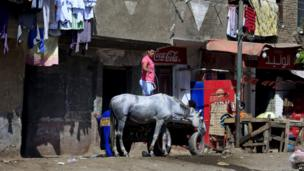 An Egyptian man bathes his horse in front of his house in Qalubiyah, north of Cairo on 13 May 2013