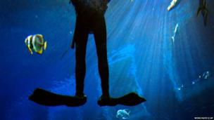 A diver is suspended underwater at Singapore's Marine Life Park