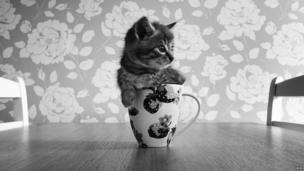 Cat in a mug