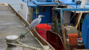 Heron on a pier