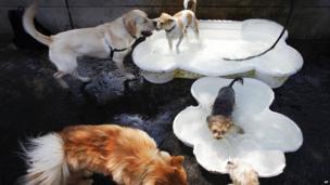 Dogs splash in canine wading pools in Hudson River Park in New York 16 July 2013