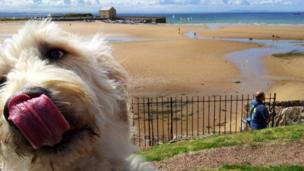 Dog on beach at Elie