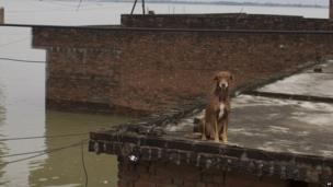 A pet dog sits on the roof of a submerged house in the city of Allahabad