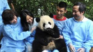 NBA star Jeremy Lin, (second from right) of Houston Rockets, his mother Shirley Lin, (left), and his father Lin Gie-ming, right, share a light moment as he cuddles a giant panda at Chengdu Research Base of Giant Panda Breeding
