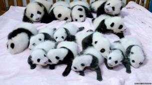 A pile of pandas