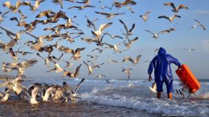 Fisherman gives food to the seagulls