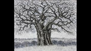 Loren Hodes Tree of Life