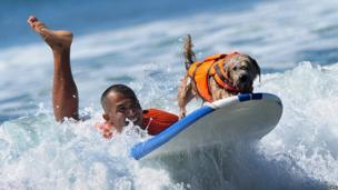 Doggy surfer with his surfer owner
