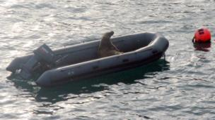 Taking a rest - a seal in a boat photographed by Howard Williams from Haverfordwest at the end of a week on Skomer island nature reserve