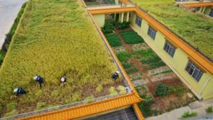 Labourers work in a paddy field on top of a wine factory, Liujiang county, China
