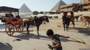 An Egyptian boy cracks a whip near horses waiting at the Pyramids of Giza in Cairo