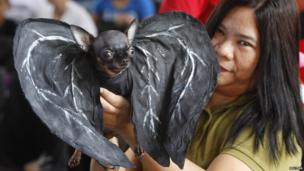 A pet owner displays her dog dressed as a bat