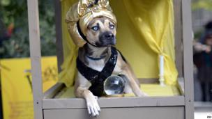 A dog dressed as a Zoltar fortune telling machine participates in the 23rd Annual Tompkins Square Halloween Dog Parade on October 26, 2013 in New York City. Thousands of spectators gather in Tompkins Square Park to watch hundreds of masquerading dogs in the countrys largest Halloween Dog Parade.