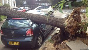 Mariana Monteiro sent in this image of a car hit by a fallen tree in north London