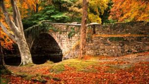 A photo of impressive autumn colours taken at Pont Ogwen, Bethesda by Richard Jones, from Caernarfon.