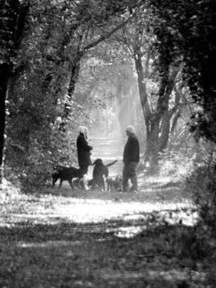Dog walkers in Aberdare