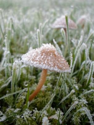 Frost on mushrooms and grass