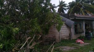 Collapsed trees on building. Photo: Edgar Du