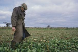 Sugar Beet Harvest, Norfolk, 2006