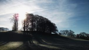 Trees at Dinefwr Park, Llandeilo